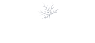 MapleSage-New-logo-without tagline-1